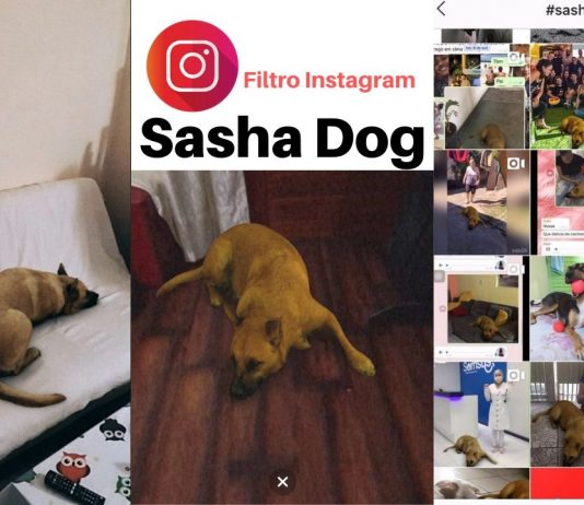 sasha dog filtro instagram